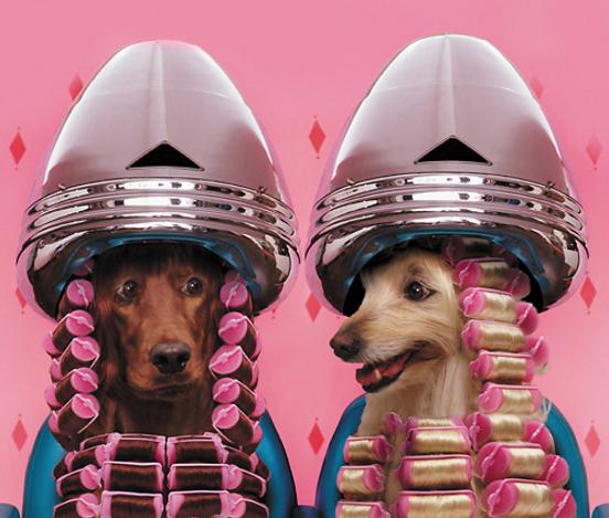 Beauty Team Pet Photo Studio