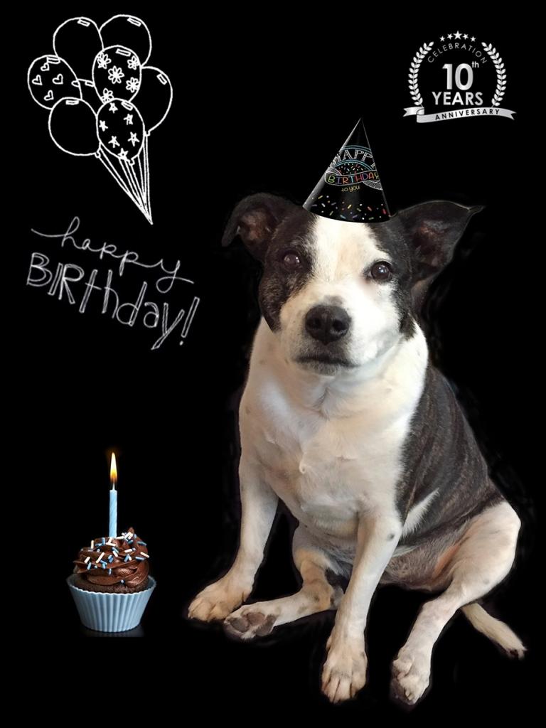 Dog Birthday Pet Photo New York
