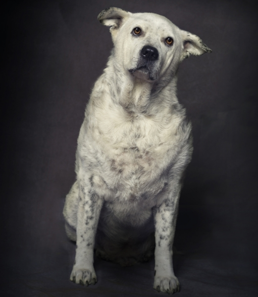 Funny Mix Breed Portrait by Pet Photography NY