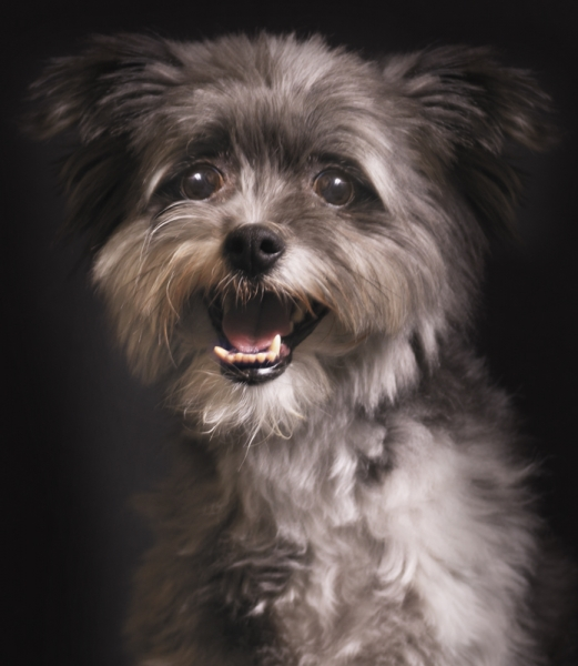 Beautiful Pet by Pet Photography NY