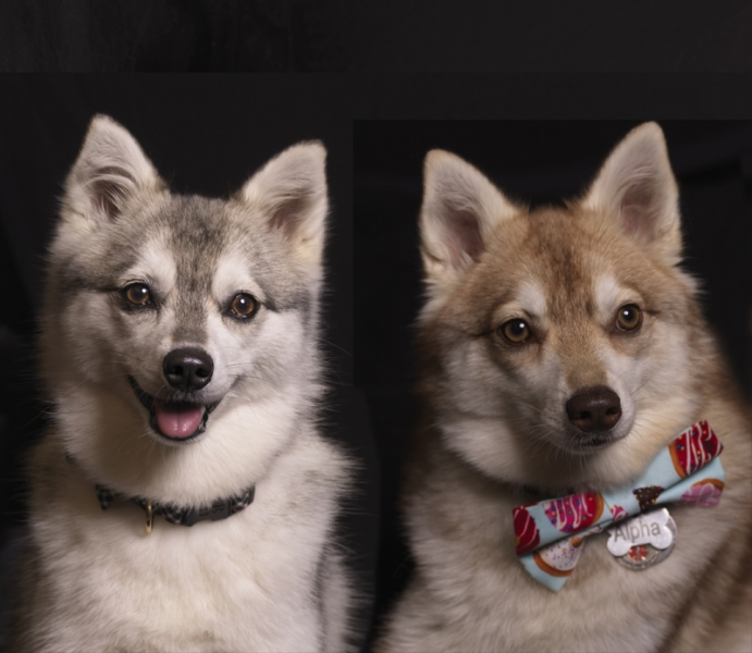 Brother and Sister Dog by Pet Photography NY