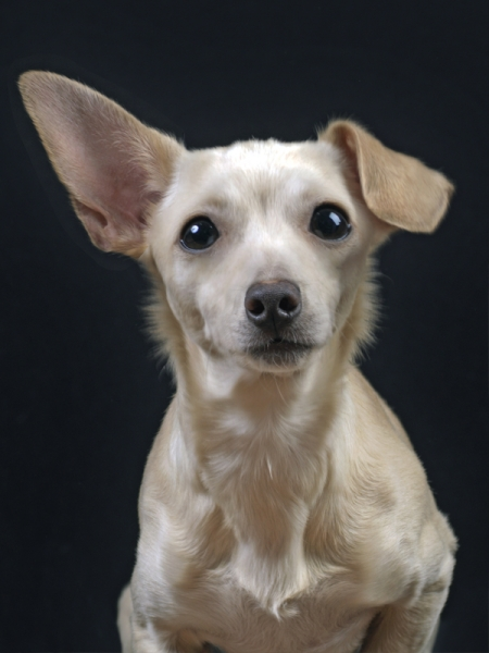 Hafiz Dog by Pet Photography NY